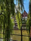 The river Ilmenau with weeping willows. Light green weeping willow that lets its branches hang over the river Ilmenau Ilmenau stock photo