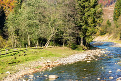 River In Autumn Mountain Forest Stock Images