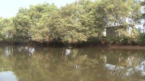 River india stock video