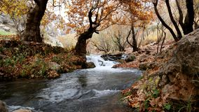 River Inside Forest Near Brown Leaf Trees Stock Photography