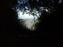 The river from inside the trees Stock Photography