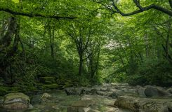 River through the interior of a forest stock photo