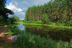 River between the islands with the pine forest Stock Image