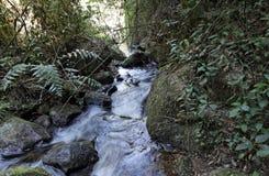 River in Itatiaia National Park Royalty Free Stock Photos