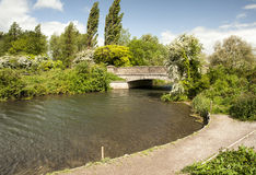 The River Itchen, Winchester. A stretch of the clean waters of the river Itchen close to the Hampshire city of Winchester Royalty Free Stock Photo
