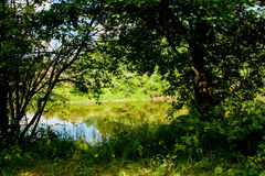 River and its banks. Trees along both sides of the water. Sky is cloudy. Royalty Free Stock Photo