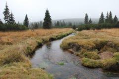River Jizera in autumn. royalty free stock photo