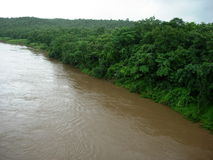 River and jungle. Scenic view of muddy river with dense green jungle Royalty Free Stock Image