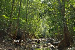 River in jungle Stock Photo