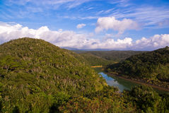 River through jungle Royalty Free Stock Image