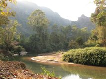 River in the jungle royalty free stock image