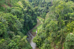 River and Jungle in Bali Royalty Free Stock Photo