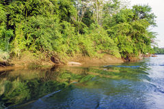 River in jungle Royalty Free Stock Images
