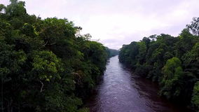 The river in the jungle. The camera slowly rises over the rainforest. Flying over the river in the tropical jungle. The river in the jungle. The camera slowly stock video footage