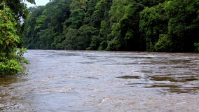 The river in the jungle of Equatorial Guinea. Beautiful landscape. Equator. Equatorial Guinea. River hidden among the trees of wild tropical jungle stock video