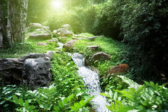 River in jungle Royalty Free Stock Photos