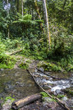 River in jungle of Panama Stock Image