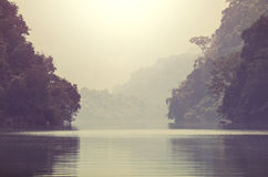 River in jungle Stock Images