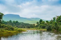 River in the Jungle. Royalty Free Stock Photography