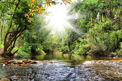 River in jungle, Thailand Royalty Free Stock Photo