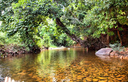 River in jungle, Thailand royalty free stock photos