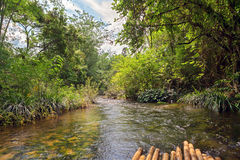 River in jungle, Thailand Royalty Free Stock Photography