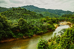 River in jungle. Royalty Free Stock Image