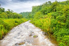 River in the jungle on the volcan baru trail chiriqui panama. River in the jungle walking on the volcan baru trail chiriqui panama Royalty Free Stock Image