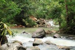 River in jungle stock image