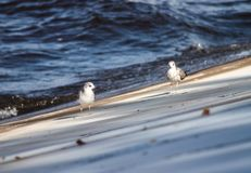 Curiousity 3. River Kama, placed in Perm region. Nice shot of bird group on the bank`s harbour Royalty Free Stock Images