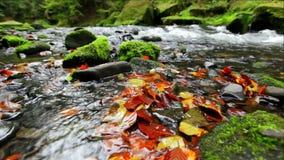 River Kamenice in autumn, Bohemian Switzerland stock footage