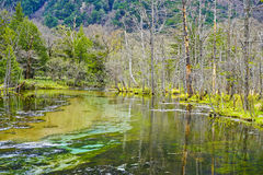 The river in the Kamikochi forest. Royalty Free Stock Images