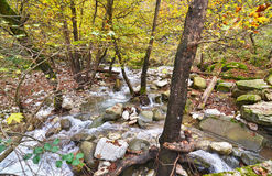 River in Karditsa forset Thessaly Greece Stock Image