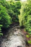 The River Kelvin. With woodland, Glasgow, UK Royalty Free Stock Image