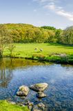 The river Kent near Staveley, Cumbria with rocks in the foreground and woodland in the distance. Stock Photography