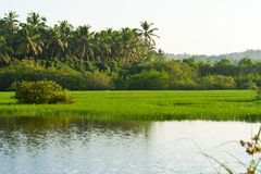 River in Kerala, India Stock Photo