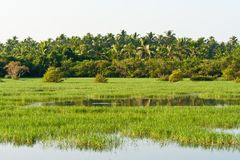 River in Kerala, India Royalty Free Stock Photos