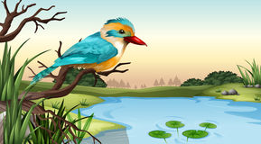 A river kingfisher. Illustration of a river kingfisher Stock Photos