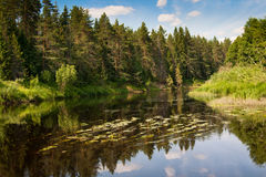River Kolpa Vologda region Stock Photography