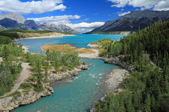 River Through Kootenay Plains, Alberta Royalty Free Stock Image