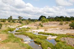 River in Kruger National Park Royalty Free Stock Photos