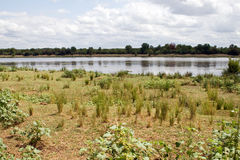 River in Kruger National Park Royalty Free Stock Image