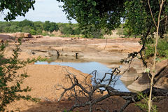 River in Kruger National Park Royalty Free Stock Photography
