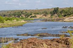 River in the Kruger National Park. South Africa Royalty Free Stock Images