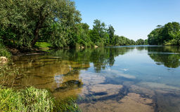 The river Kupa in Slovenia. Odsev trees on the water surface, a prominent rocky river bottom Stock Photos