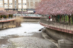 River La Valira in the city of La Vella in Andorra. Flowered trees and river banks stock photography