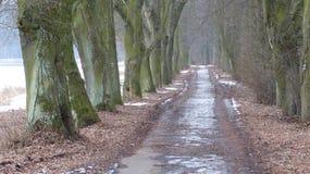 River of Labe. Path along the  near Podebrady Stock Photos