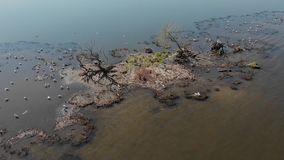 River or lake with birds. Ecological reserve stock footage
