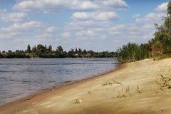 River lake shore vegetation. River lake swamp vegetation beach Royalty Free Stock Image