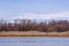 River landscape with dry grass and trees with the birds in the sky stock images